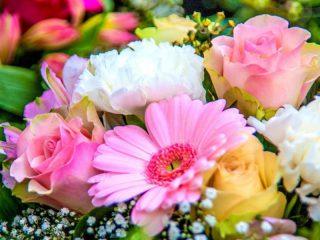 گالری گل قاصدک