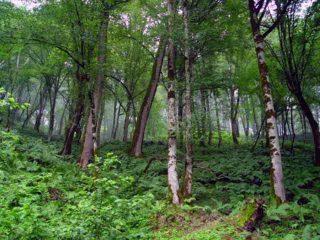 جنگل حفاظت شده خیبوس